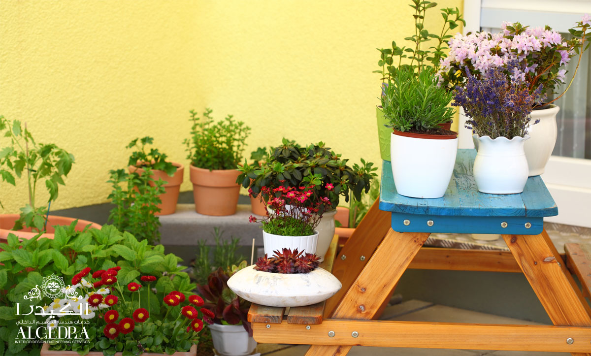 How to Spice up your Balcony with Plants